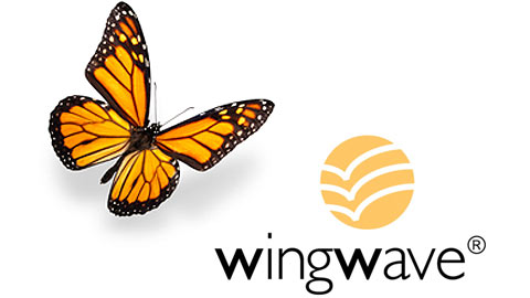wingwave коучинг обучение